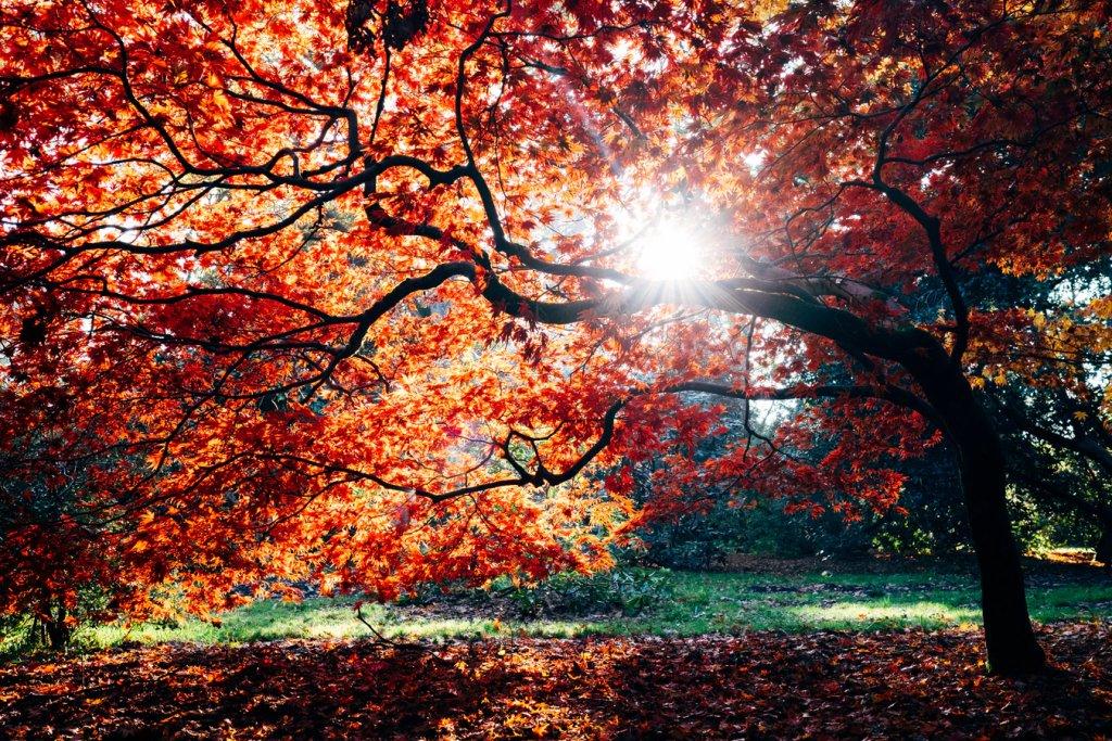 herfst scootmobiel